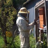 Pierre, apiculteur bio